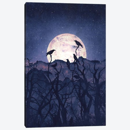 Midnight Chorus Canvas Print #TRC37} by Tracie Andrews Canvas Artwork