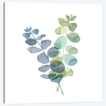 Natural Inspiration Blue Eucalyptus on White I Canvas Print #TRE234} by Tara Reed Canvas Artwork