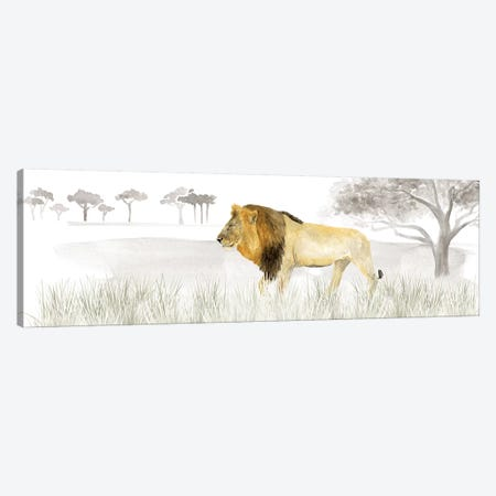 Serengeti Lion Horizontal Panel Canvas Print #TRE264} by Tara Reed Canvas Art Print
