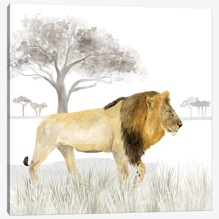 Serengeti Lion Square Canvas Print #TRE265} by Tara Reed Art Print