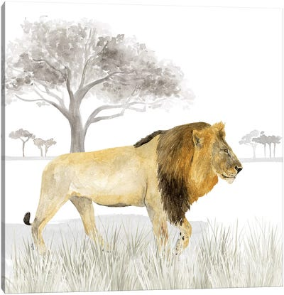 Serengeti Lion Square Canvas Art Print