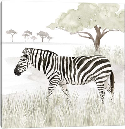 Serengeti Zebra Square Canvas Art Print