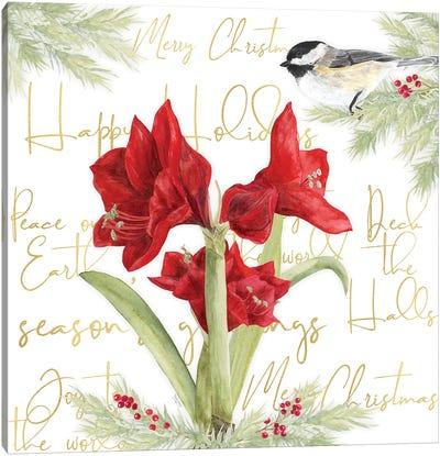 Merry Amaryllis I Canvas Art Print