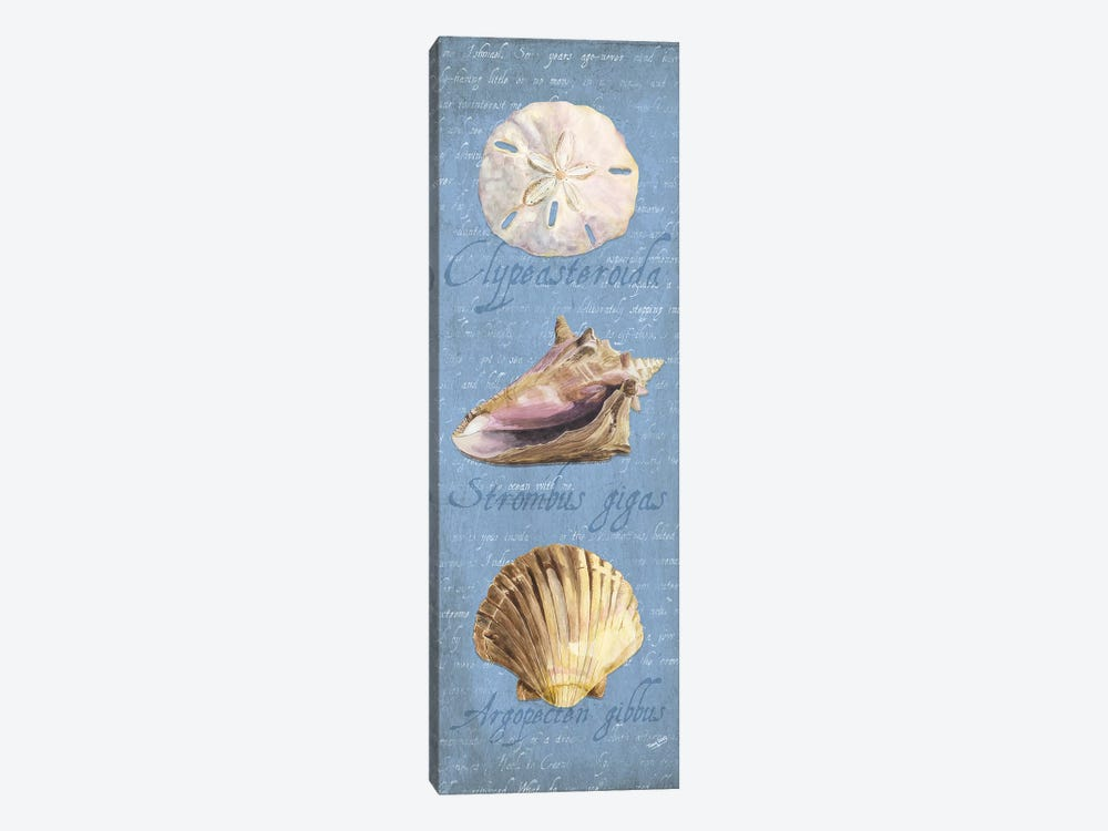 Oceanum Shell Blue Panel I by Tara Reed 1-piece Canvas Print