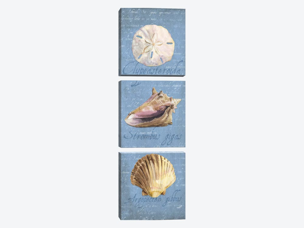 Oceanum Shell Blue Panel I by Tara Reed 3-piece Canvas Art Print