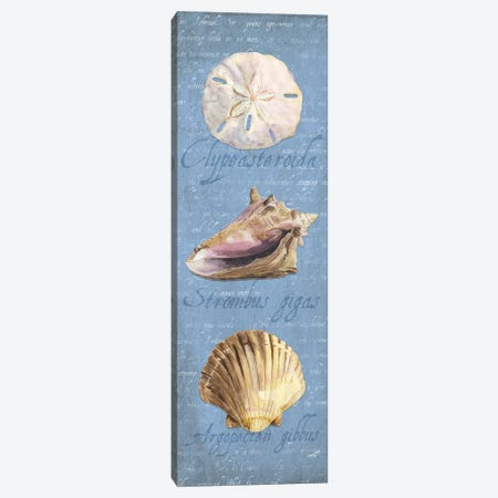 Oceanum Shell Blue Panel I 3-Piece Canvas #TRE43} by Tara Reed Canvas Art