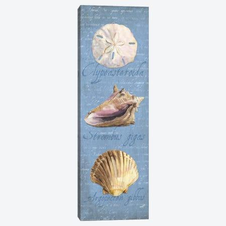 Oceanum Shell Blue Panel I Canvas Print #TRE43} by Tara Reed Canvas Art