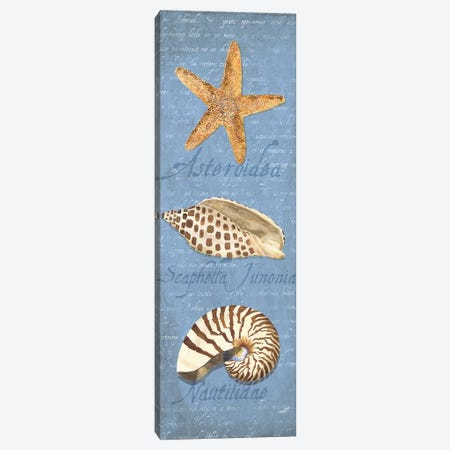 Oceanum Shell Blue Panel II Canvas Print #TRE44} by Tara Reed Canvas Art Print