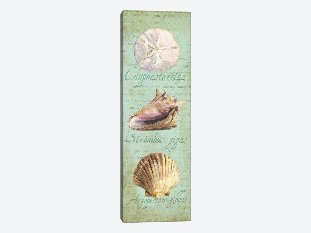 Oceanum Shell Green Panel I by Tara Reed 1-piece Canvas Art Print