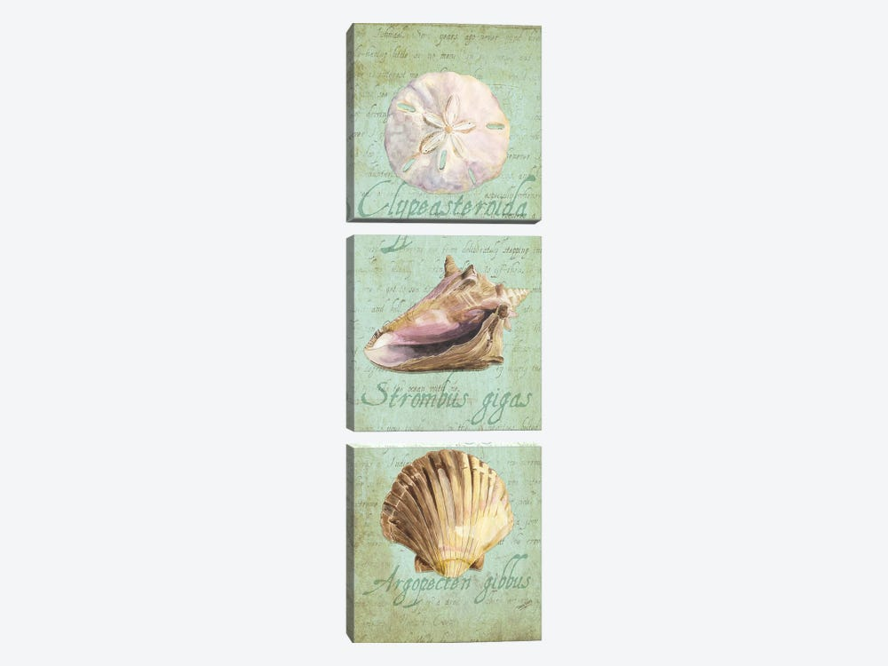 Oceanum Shell Green Panel I by Tara Reed 3-piece Art Print