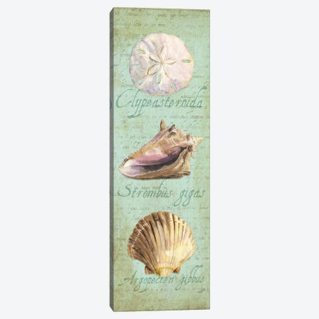 Oceanum Shell Green Panel I 3-Piece Canvas #TRE45} by Tara Reed Canvas Print