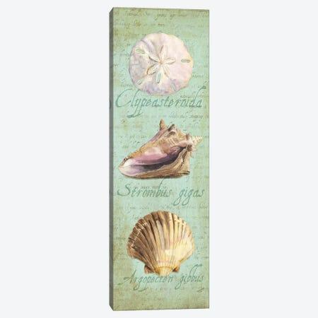 Oceanum Shell Green Panel I Canvas Print #TRE45} by Tara Reed Canvas Print