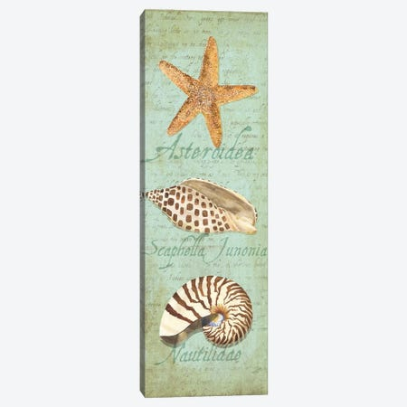 Oceanum Shell Green Panel II 3-Piece Canvas #TRE46} by Tara Reed Art Print