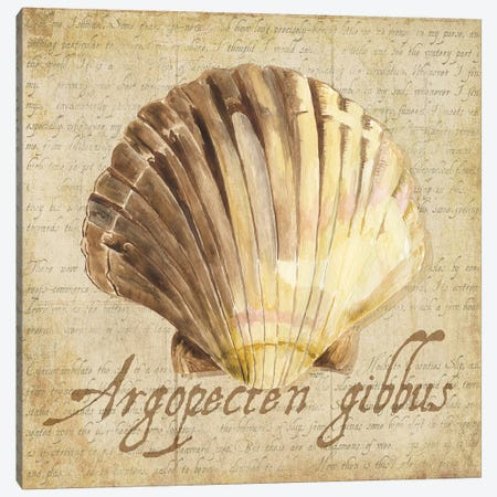 Oceanum Shells Beige V Canvas Print #TRE51} by Tara Reed Canvas Art Print