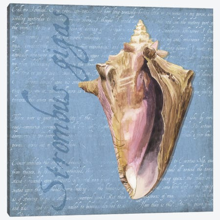 Oceanum Shells Blue I Canvas Print #TRE53} by Tara Reed Art Print