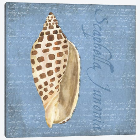 Oceanum Shells Blue II Canvas Print #TRE54} by Tara Reed Canvas Art
