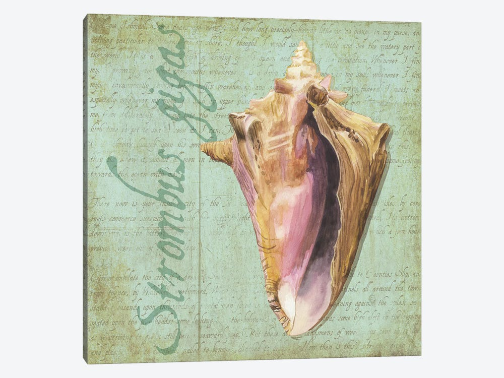 Oceanum Shells Green I 1-piece Canvas Art