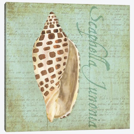 Oceanum Shells Green II Canvas Print #TRE60} by Tara Reed Canvas Wall Art