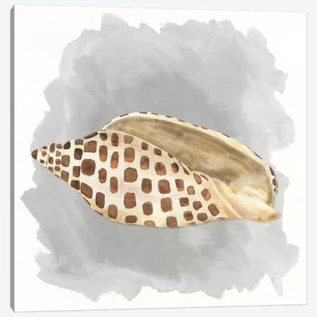 Shells On Grey I Canvas Print #TRE77} by Tara Reed Canvas Art
