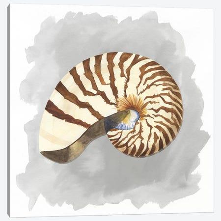 Shells On Grey III Canvas Print #TRE79} by Tara Reed Canvas Print