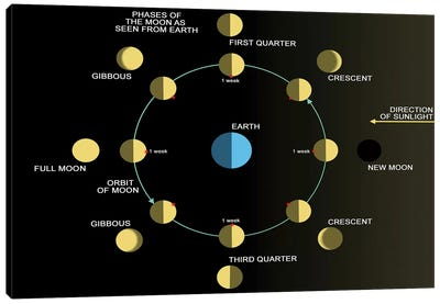 A Diagram Showing The Phases Of The Earth's Moon Canvas Art Print