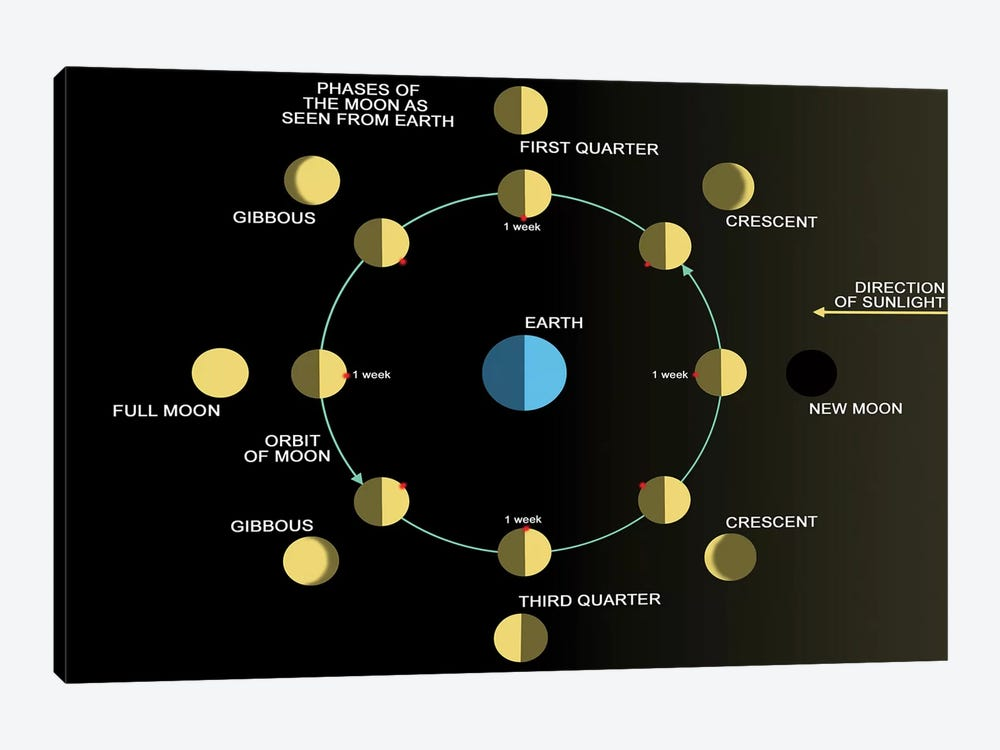 A Diagram Showing The Phases Of The Earth's Moon by Ron Miller 1-piece Canvas Print