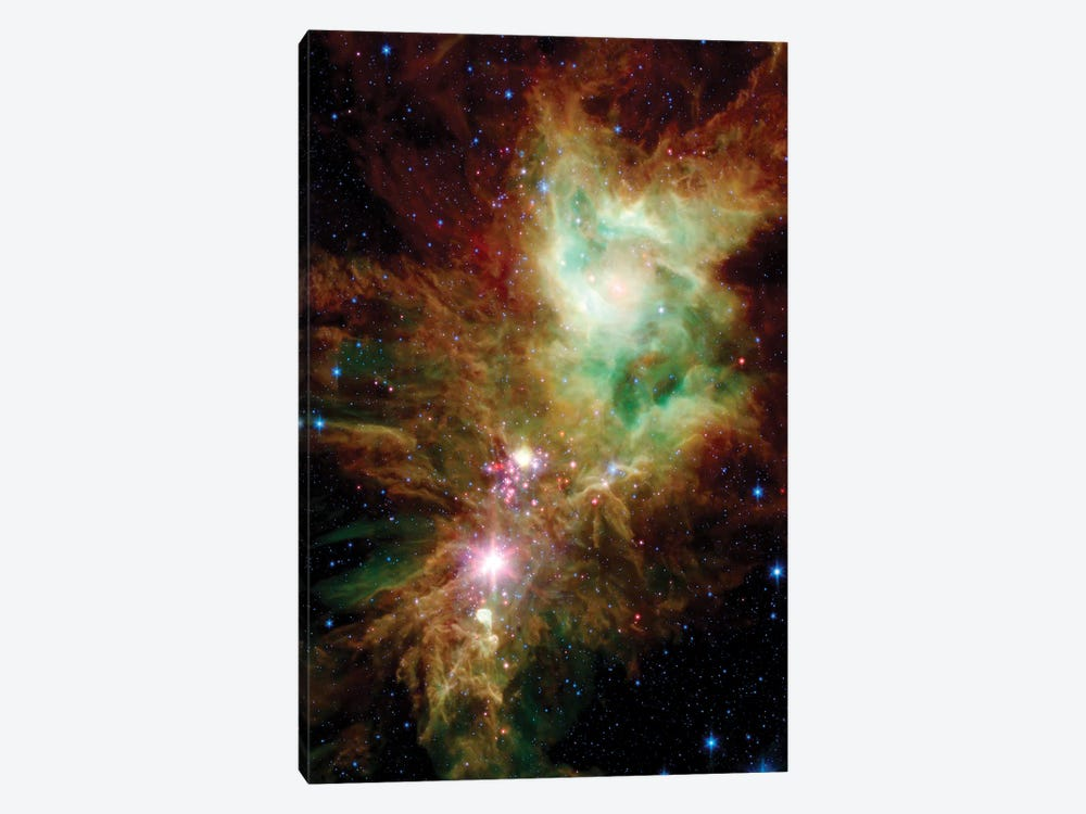 Newborn Stars In The Christmas Tree Cluster (NGC 2264) by Stocktrek Images 1-piece Canvas Art Print