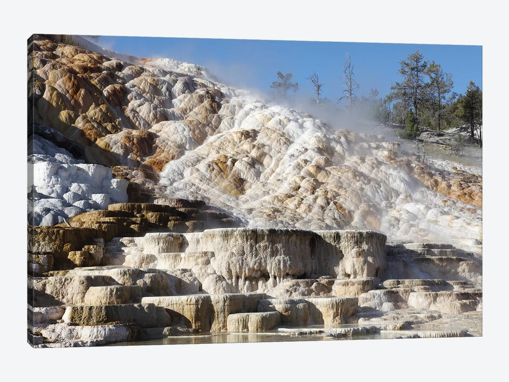 Palette Spring And Travertine Sinter Terraces Mammoth Hot Springs, Yellowstone National Park by Richard Roscoe 1-piece Canvas Art