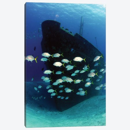 School Of Horse-Eye Jack Fish Swimming By The Ray Of Hope Shipwreck Canvas Print #TRK1960} by Amanda Nicholls Art Print