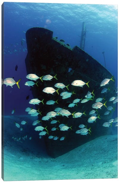 School Of Horse-Eye Jack Fish Swimming By The Ray Of Hope Shipwreck Canvas Art Print