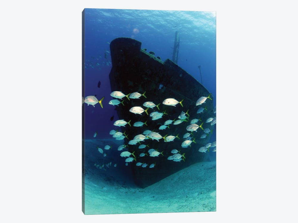 School Of Horse-Eye Jack Fish Swimming By The Ray Of Hope Shipwreck by Amanda Nicholls 1-piece Canvas Art Print