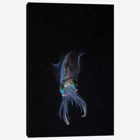 A Reef Squid Hovers Above The Sandy Bottom Of The Ocean I Canvas Print #TRK1986} by Brook Peterson Canvas Wall Art