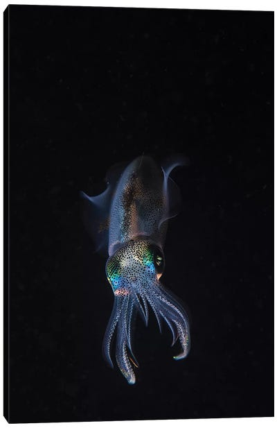 A Reef Squid Hovers Above The Sandy Bottom Of The Ocean I Canvas Art Print