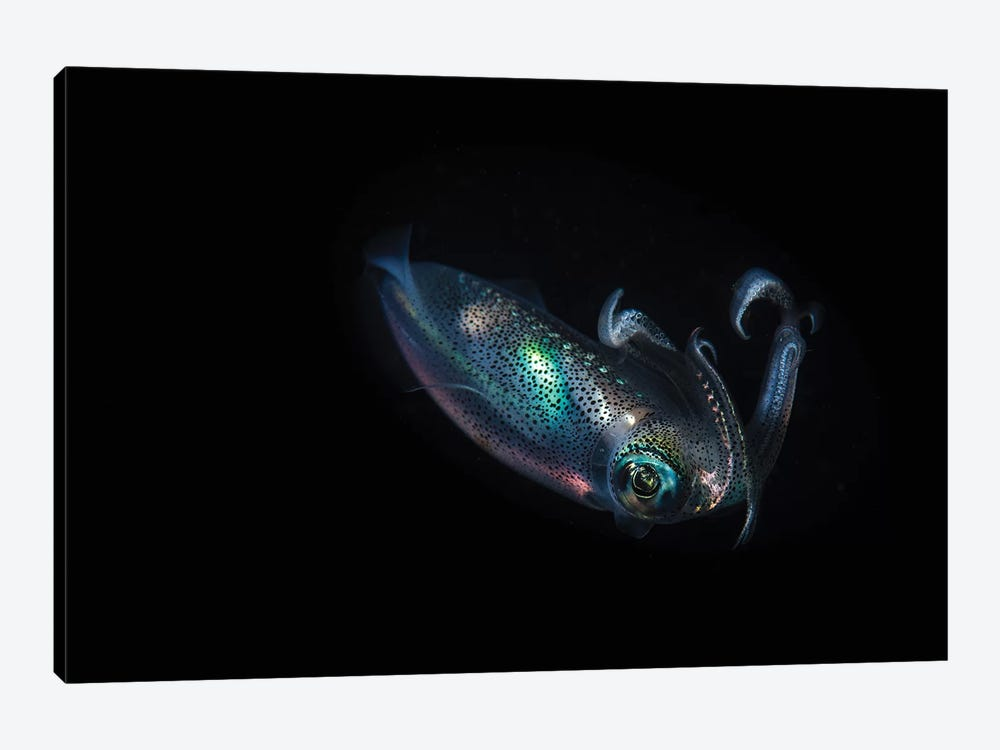 A Reef Squid Hovers Above The Sandy Bottom Of The Ocean II by Brook Peterson 1-piece Canvas Wall Art