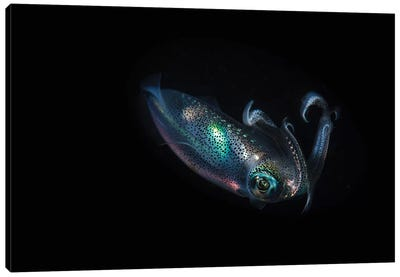 A Reef Squid Hovers Above The Sandy Bottom Of The Ocean II Canvas Art Print