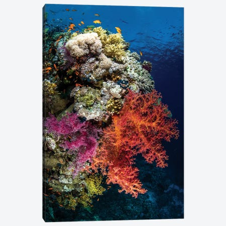 Reef Scene In The Red Sea Canvas Print #TRK1990} by Brook Peterson Canvas Art