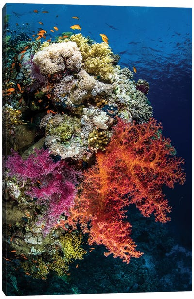 Reef Scene In The Red Sea Canvas Art Print
