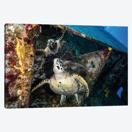 Turtle Gazes At Its Reflection Under The USS Kittiwake Shipwreck In Cayman Islands Canvas Print #TRK1992} by Brook Peterson Canvas Artwork