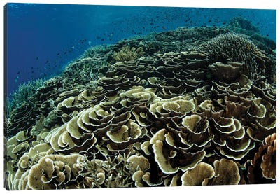 A Beautiful And Fragile Coral Reef Grows In Komodo National Park, Indonesia I Canvas Art Print
