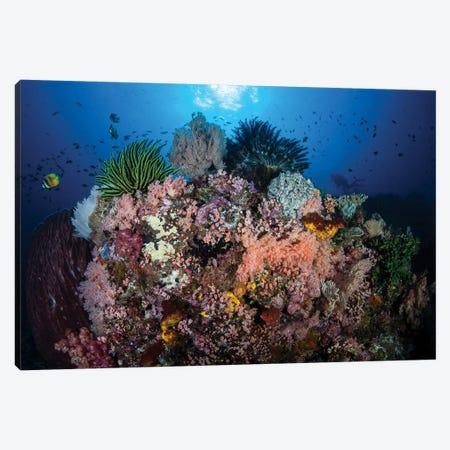 A Beautiful And Fragile Coral Reef Grows In Komodo National Park, Indonesia II Canvas Print #TRK2004} by Ethan Daniels Canvas Print