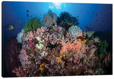 A Beautiful And Fragile Coral Reef Grows In Komodo National Park, Indonesia II Canvas Art Print