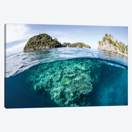 A Beautiful Coral Reef Grows In Raja Ampat, Indonesia Canvas Print #TRK2005} by Ethan Daniels Art Print