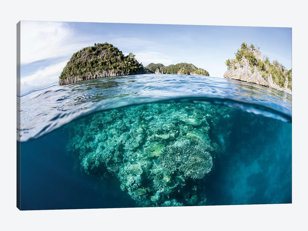 A Beautiful Coral Reef Grows In Raja Ampat, Indonesia by Ethan Daniels 1-piece Canvas Art