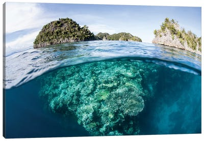 A Beautiful Coral Reef Grows In Raja Ampat, Indonesia Canvas Art Print