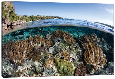 A Beautiful Coral Reef Thrives In Shallow Water In The Lesser Sunda Islands Canvas Art Print
