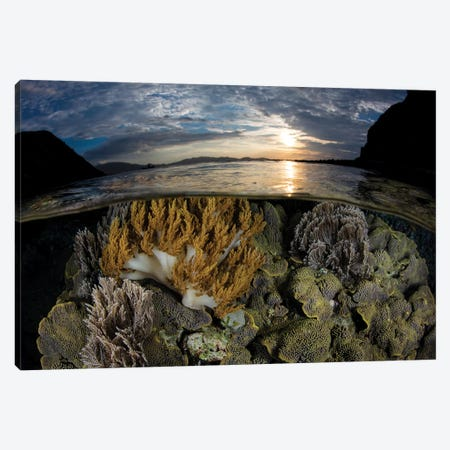 A Beautiful Set Of Corals Grows In Shallow Water In Komodo National Park, Indonesia Canvas Print #TRK2007} by Ethan Daniels Art Print