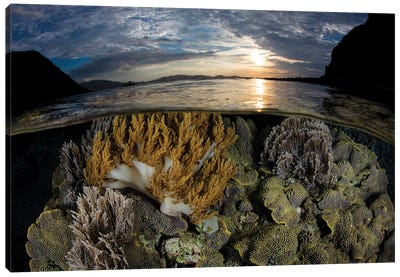 A Beautiful Set Of Corals Grows In Shallow Water In Komodo National Park, Indonesia Canvas Art Print