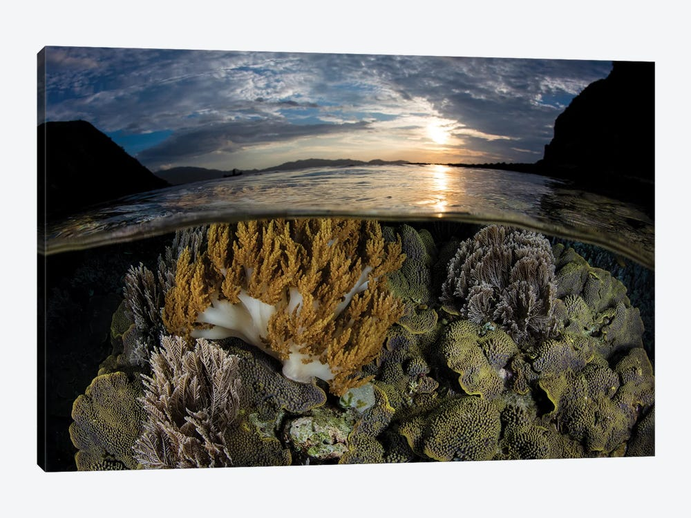 A Beautiful Set Of Corals Grows In Shallow Water In Komodo National Park, Indonesia by Ethan Daniels 1-piece Canvas Wall Art