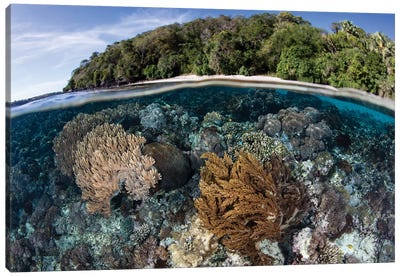A Coral Reef Thrives In Shallow Water Near Alor In The Lesser Sunda Islands Of Indonesia Canvas Art Print