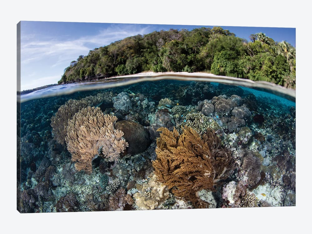 A Coral Reef Thrives In Shallow Water Near Alor In The Lesser Sunda Islands Of Indonesia by Ethan Daniels 1-piece Canvas Art